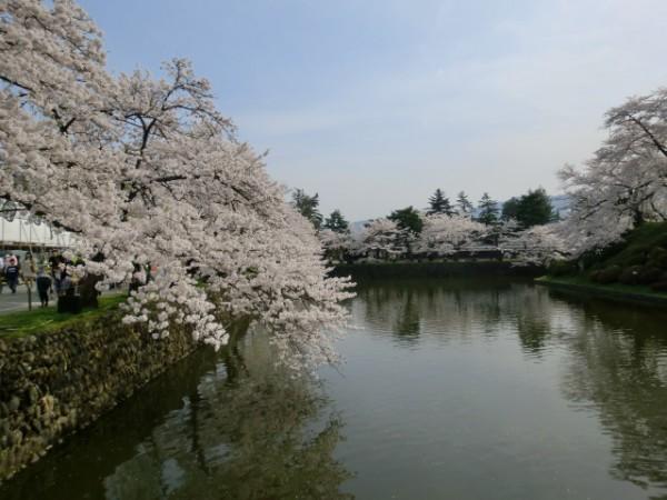 米沢・上杉神社、桜