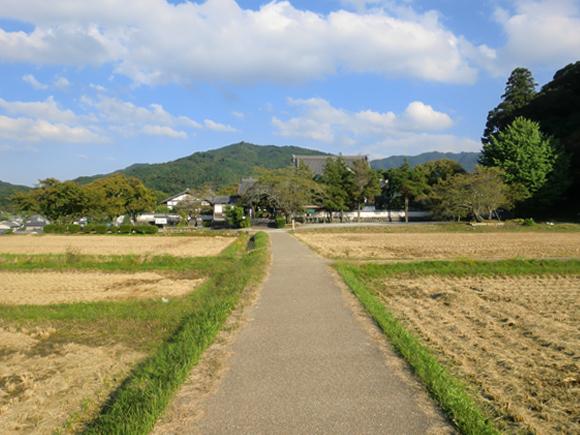 橘寺への道