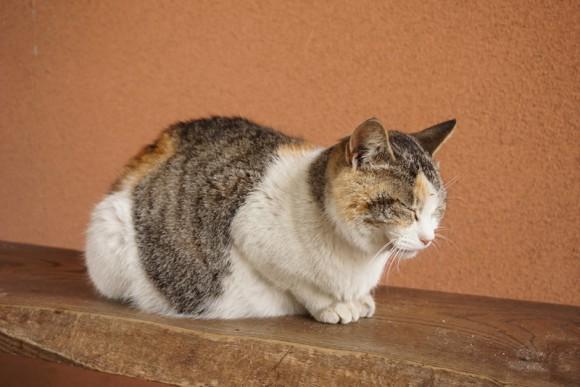 売店の看板猫