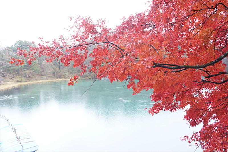 裏磐梯の五色沼の紅葉。雨でしたが美しかったです。