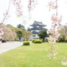 GWにおすすめ☆行くぜ東北!桜舞い散る弘前城〜るっかの城がたり
